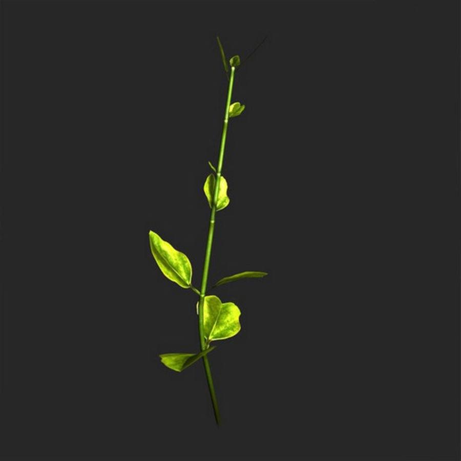 petite plante royalty-free 3d model - Preview no. 4