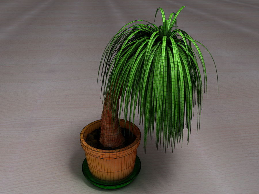 Palm Tree Plant Pot royalty-free 3d model - Preview no. 2