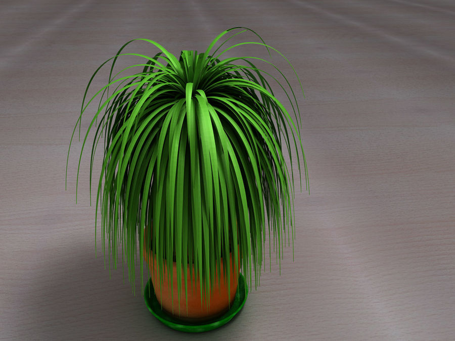 Palm Tree Plant Pot royalty-free 3d model - Preview no. 7