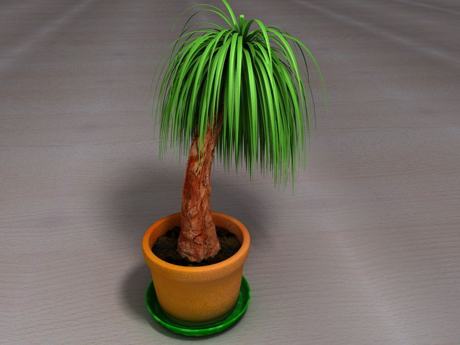 Palm Tree Plant Pot royalty-free 3d model - Preview no. 4