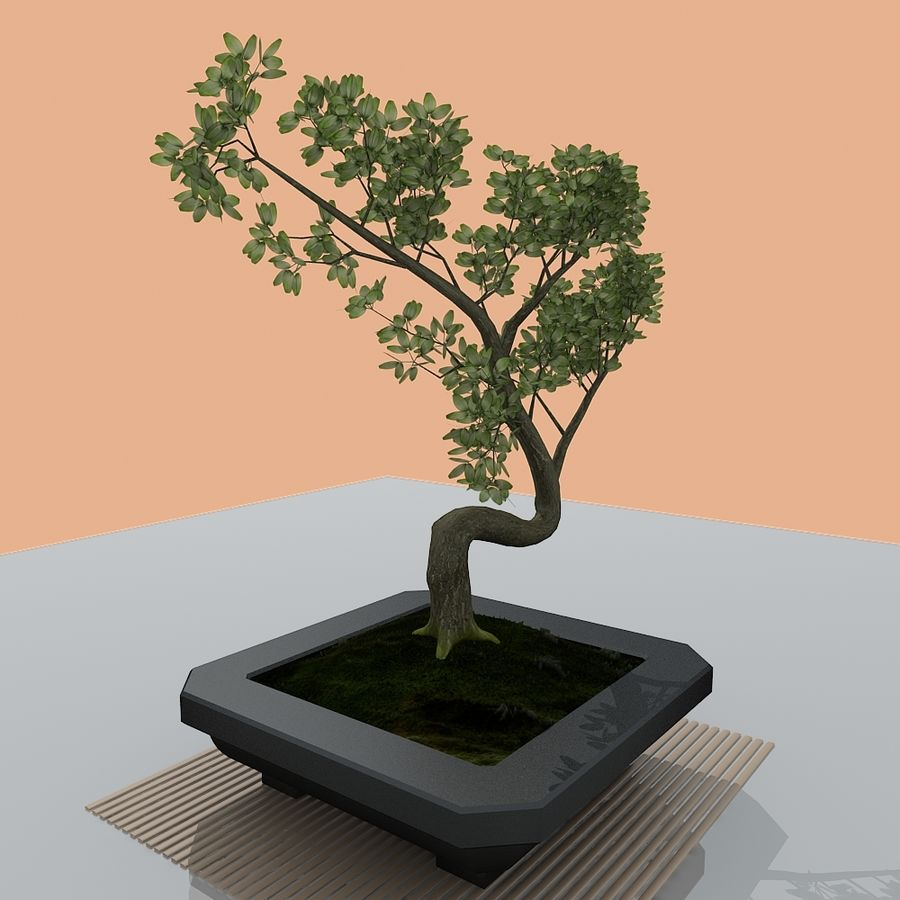 Bonsai Tree 3d Model 6 Max Free3d