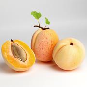 apricot 3d model