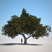 Vegetação HQ - pequena árvore 1 3d model