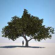 HQ Растительность - Маленькое Дерево 1 3d model