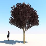 HQ Vegetation - Purple Leaf Plum Tree 3d model
