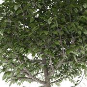 木のトリミング球 3d model