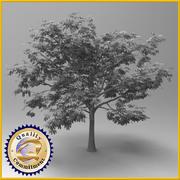 板栗树 3d model