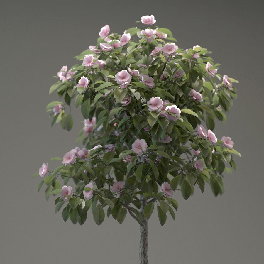 HQ Растительность - Декоративное Дерево royalty-free 3d model - Preview no. 4