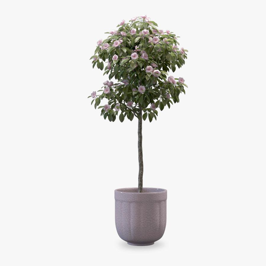 HQ Растительность - Декоративное Дерево royalty-free 3d model - Preview no. 1