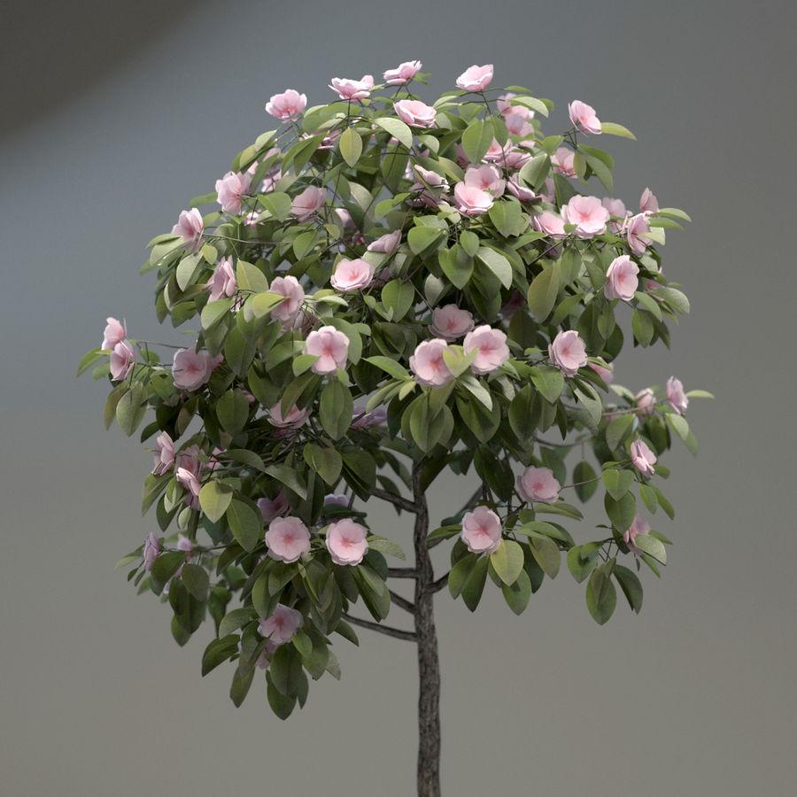 HQ Растительность - Декоративное Дерево royalty-free 3d model - Preview no. 5