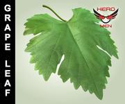 Виноградный лист 3d model