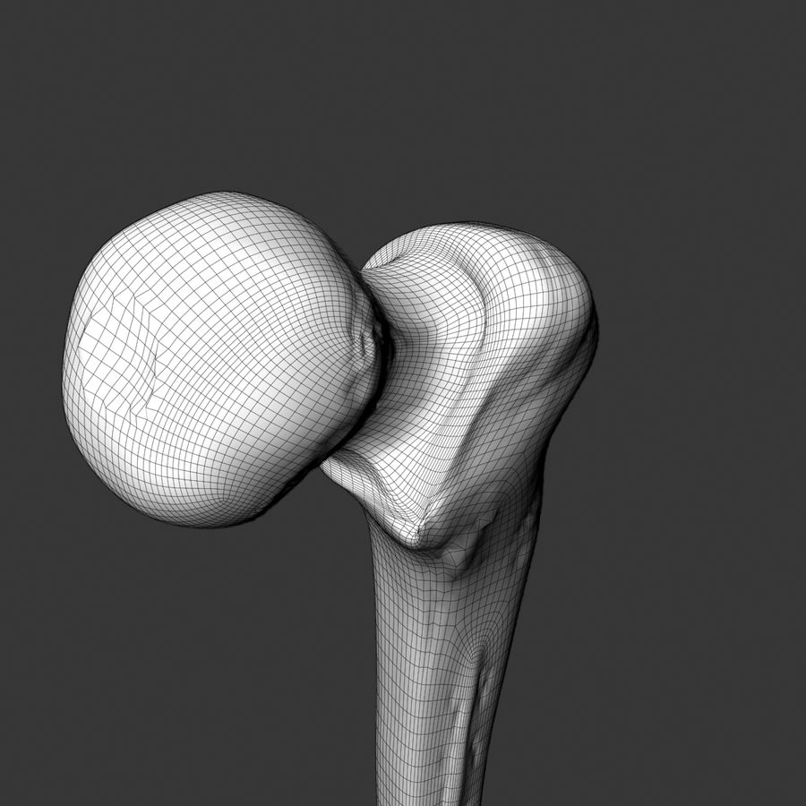 femur_3dsmax royalty-free 3d model - Preview no. 5