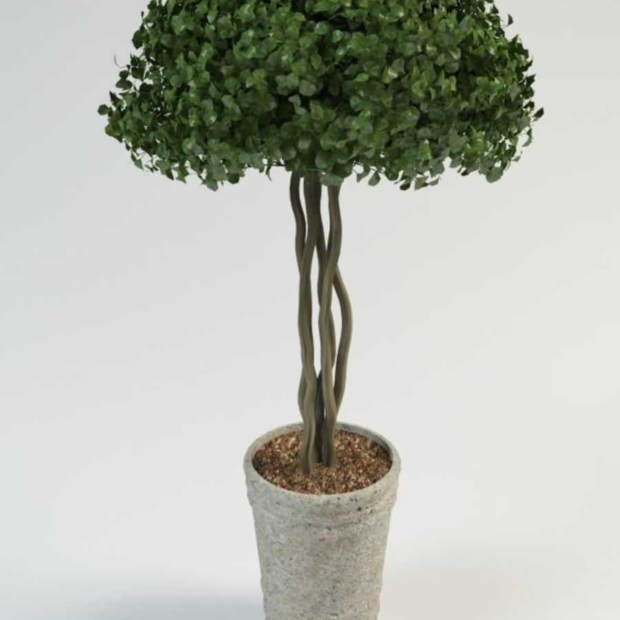 bush shrub(1) royalty-free 3d model - Preview no. 2