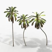 Planter des cocos 3d model