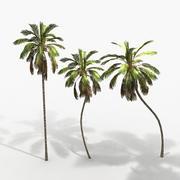 Plant Palm Cocos 3d model