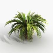 Plant Palm Cycas 3d model