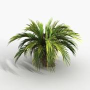 Planter des Cycas 3d model