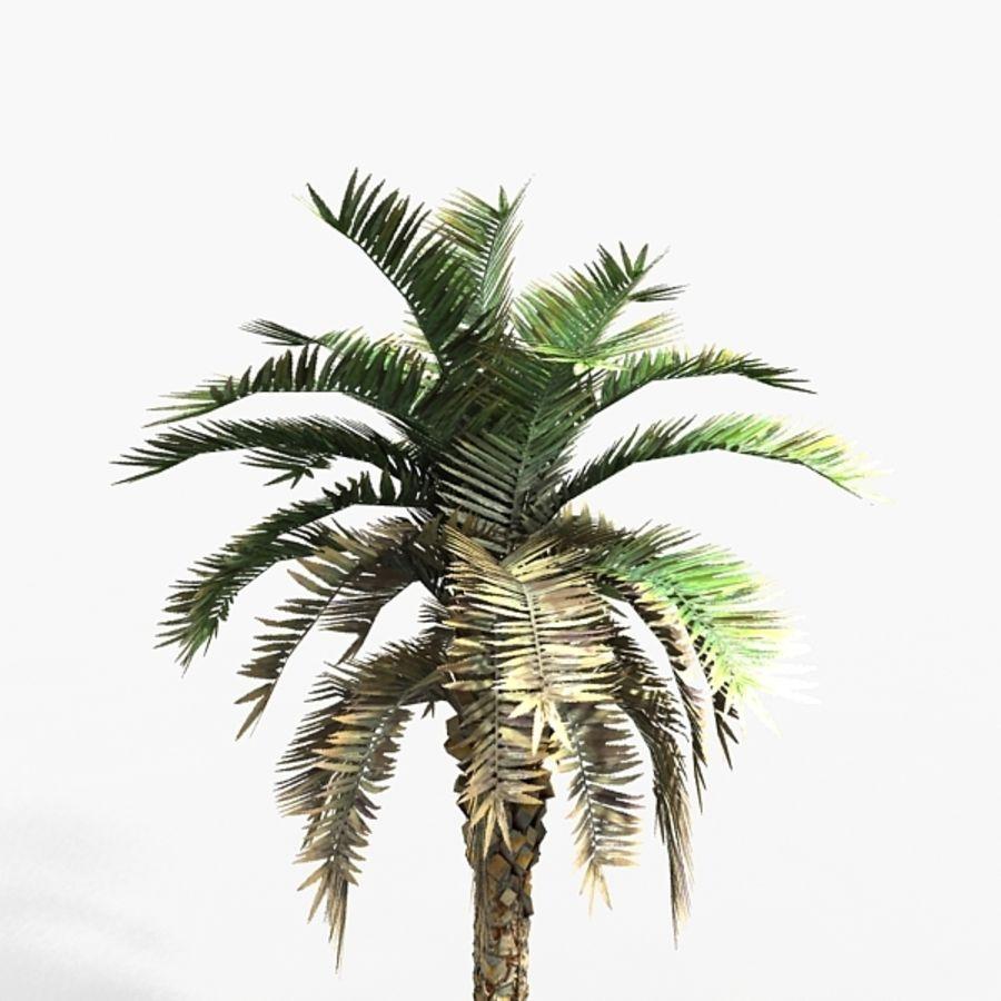 植物のやしフェニックス royalty-free 3d model - Preview no. 3