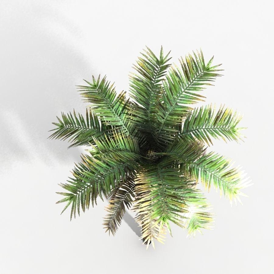 植物のやしフェニックス royalty-free 3d model - Preview no. 4
