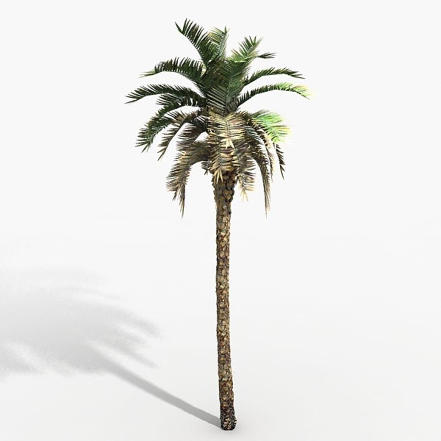 植物のやしフェニックス royalty-free 3d model - Preview no. 1