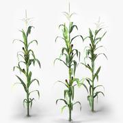 玉米 3d model