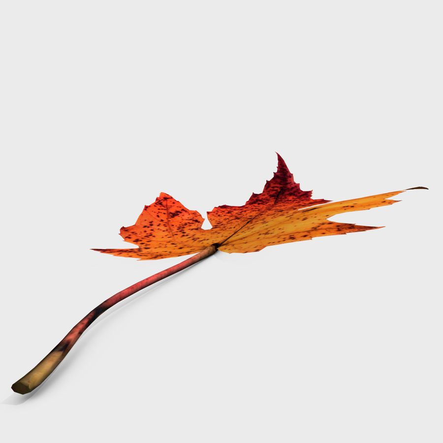 Fall Leaf royalty-free 3d model - Preview no. 3