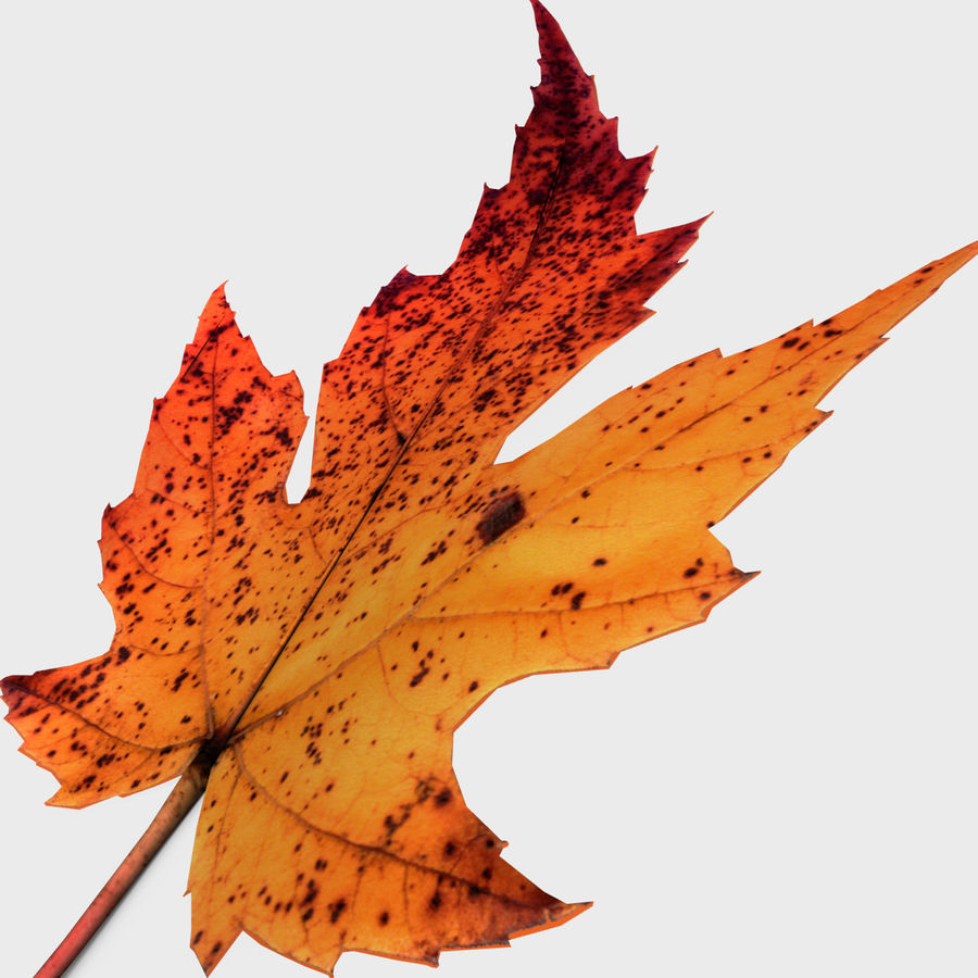 Fall Leaf royalty-free 3d model - Preview no. 2