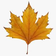 秋のカエデの葉v2 3d model