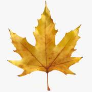 秋のカエデの葉v3 3d model