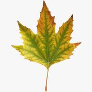 秋のカエデの葉v4 3d model