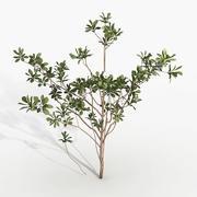 植物マグノリア 3d model