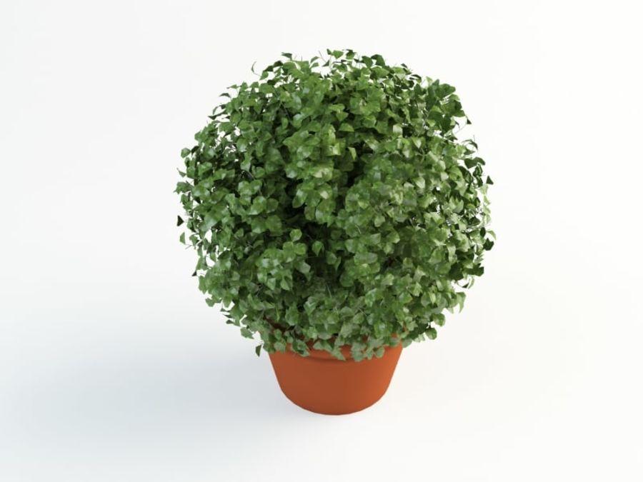 bush shrub royalty-free 3d model - Preview no. 2