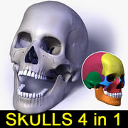 Human skulls 4 in 1 (Color & Textured) 3d model