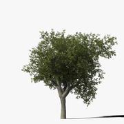 Meşe Ağacı Türü8 3d model