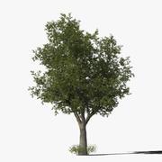 Meşe Ağacı Türü10 3d model