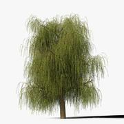 Söğüt Ağacı Tipi12 3d model