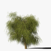 Tipo de árvore de salgueiro8 3d model