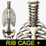 Rib cage and Vertebra 3d model