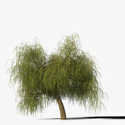 Willow Tree Type9 3d model