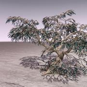 橄榄树Barska 3d model