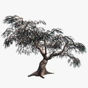 Zeytin Ağacı Barska 3d model