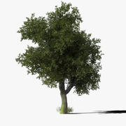 Oak Tree Type6 3d model