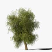 Willow Tree Type7 3d model
