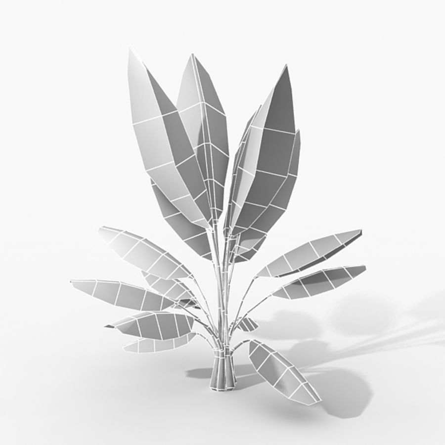 Plant Banana Palm royalty-free 3d model - Preview no. 2