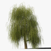 Ива Дерево Тип4 3d model