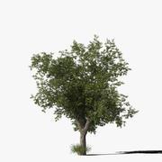 오크 나무 Type9 3d model
