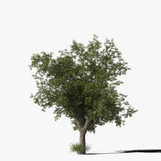 Meşe Ağacı Tip9 3d model