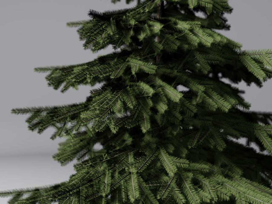Fir Tree royalty-free 3d model - Preview no. 4