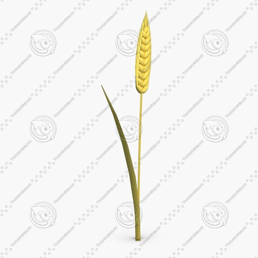 Espiga de trigo royalty-free modelo 3d - Preview no. 2