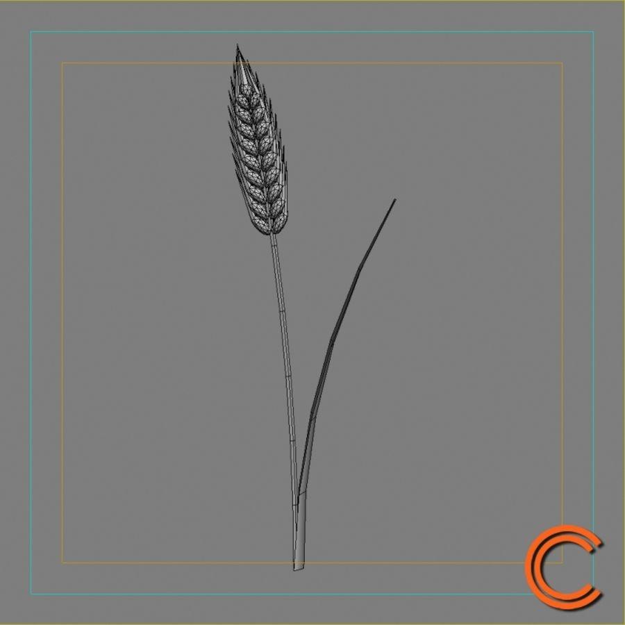 Espiga de trigo royalty-free modelo 3d - Preview no. 5